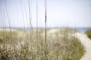Bald Head Island NC Landscape
